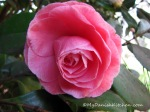 Botanical Garden Spring(19)ew