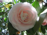 Botanical Garden Spring(21)
