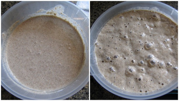 Feed your Sour Dough Starter. Keep at room temperature until it bubbles up and then refrigerate.