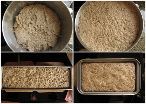 Dough rising in bowl x 2 hours. Dough rising in bread pans x 30 plus minutes.