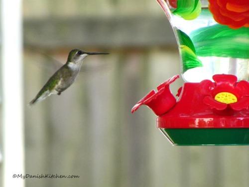 Hummingbird (2)ewWeb